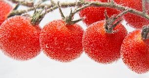 Tomat drop Stock Image