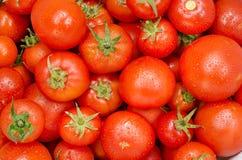 Tomat för matgrupp Royaltyfri Fotografi