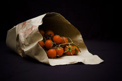 tomat för pachino s Royaltyfria Foton