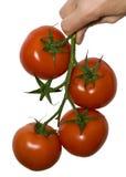 tomat fyra Arkivbilder