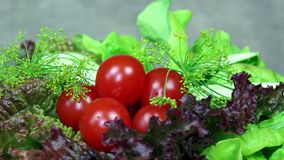 Tomat-, gurka-, grönsallat- och dillgrönsaker skivtallrik moturs lager videofilmer