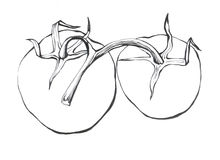 Tomat Hand dragen svartvit illustration Royaltyfri Foto