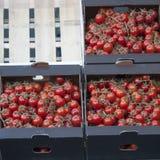 Tomat i ask i stadmarknad i London Royaltyfri Bild