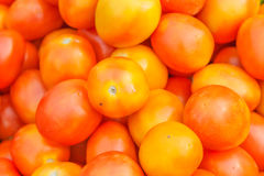 Tomat i marknad av Thailand Fotografering för Bildbyråer