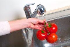 Tomat i vasken Royaltyfri Bild