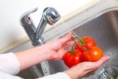 Tomat i vasken Arkivbild