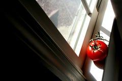 tomat ii Fotografering för Bildbyråer