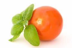 Tomat med basilika arkivbild