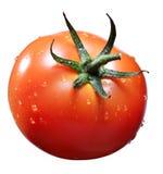 Tomat med waterdrop arkivfoton