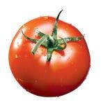 Tomat med waterdrop fotografering för bildbyråer