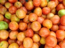 Tomat mycket för abstrakt bakgrund Royaltyfria Bilder