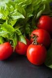 Tomat- och basilikacloseup Arkivbild