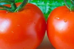 Tomat- och gurkanärbild Arkivbilder