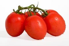 Tomat på white Arkivfoto