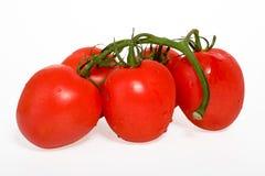 Tomat på white Royaltyfri Bild