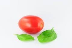 Tomat (roma - solanumlycopersicum) med gröna sidor Fotografering för Bildbyråer