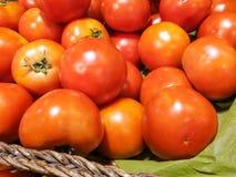 Tomat som är till salu på marknaden Arkivbilder