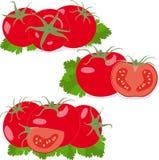 Tomat Ställ in tomater och persiljasidor Grönsaker Royaltyfri Bild