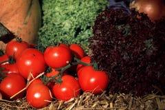 Tomata - alface - abóbora, - cebola - vegetais Fotos de Stock