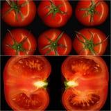 Tomatcollage Fotografering för Bildbyråer