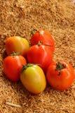 Tomatdeg på ricen Royaltyfri Fotografi