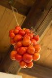Tomatdruva från tak royaltyfri fotografi