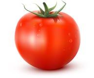 Tomate illustration stock