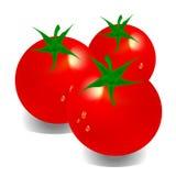 tomate Ilustração Stock