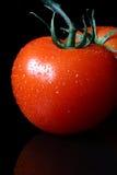 tomate Photographie stock libre de droits