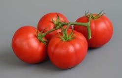 Tomate 12 Fotografia de Stock Royalty Free