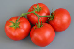 Tomate 18 Fotos de Stock Royalty Free