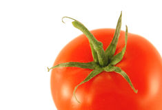 Tomate Stock Photography