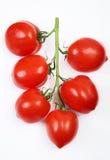Tomate Imagens de Stock