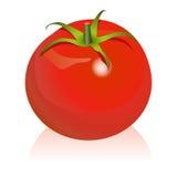 Tomate Imagens de Stock Royalty Free