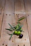 Tomate aceite för aceitunas y Royaltyfri Fotografi