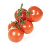 Tomate auf der Niederlassung lokalisiert auf Weiß Lizenzfreie Stockfotografie