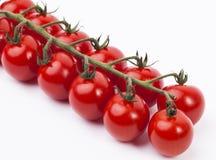 Tomate auf der Rebe Stockbild
