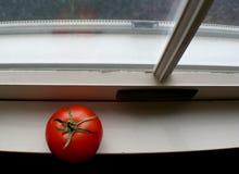 Tomate auf Fenster-Rahmen Stockfotografie