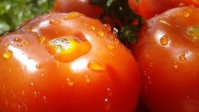 Tomate auf hölzerner strömender Energiewasserzeitlupe stock video