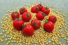 Tomate auf Körnern Stockbilder
