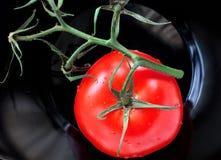 Tomate auf Rebe Stockfotos