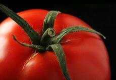 Tomate auf Schwarzem lizenzfreie stockfotos
