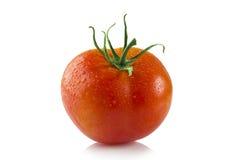 Tomate auf weißem Hintergrund Stockfoto