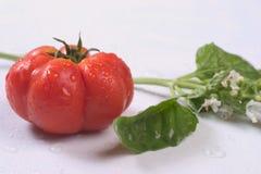 Tomate avec l'épice Photographie stock libre de droits