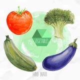 Tomate, bróculi, calabacín y berenjena pintados a mano de la acuarela Imagen de archivo libre de regalías