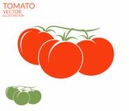 Tomate branchement illustration stock