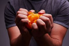 Tomate caseiro delicioso em uma mão do ` s do homem fotografia de stock