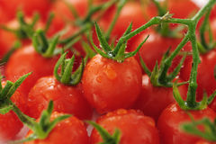 Tomate-cerise Photographie stock