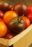 Tomate-cerise Images stock