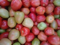 Tomate-cerise cultivée, tomate comestible, tomate de jardin, pomme d'amour, tomate ensoleillée, tomate ou tomate-cerise sauvage Photographie stock
